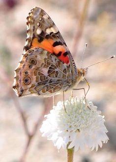 Butterfly Dance by C Nelson
