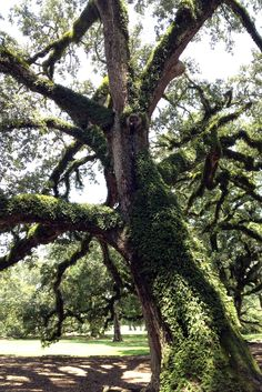 Cajun Country tour from New Orleans #usa #travel