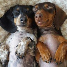 Sweet dreaming Doxies...
