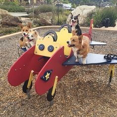 Instagram media by threecorgis - Come fly Corgi Airways with @corginista aka Maki Boo! ✈️✈️✈️ This is one of our best buds cuz Maki Boo is super cool!  @corginista is full of fun pics and furiends ❤️❤️❤️ Maki Boo is sitting on the tail! Follow @corginista  #threecorgis #corgi #cute #❤️
