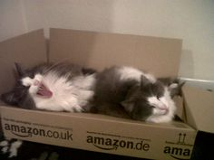 Special Delivery!  Not sure if Bilbo and Frodo are sending or receiving...