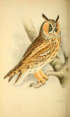 https://flic.kr/p/cVZhjE   n187_w1150   Coloured illustrations of British birds, and their eggs /. London :G.W. Nickisson,1842-1850.. biodiversitylibrary.org/page/40246172