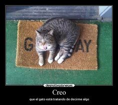 carteles imaginacion humor graciosas gatos chiste animales desmotivaciones