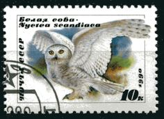 Owl postage stamp, Russia.