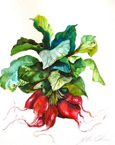 watercolor paintings of radishes | Watercolor Painting, Original Painting, Radishes, Still Life Painting ...