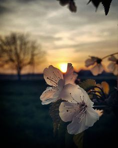 God is simple. Everything else is complex. Do not seek absolute values in the relative world of nature. Photo Background Images, Photo Backgrounds, Wallpaper Backgrounds, Beautiful Flowers Wallpapers, Pretty Wallpapers, Flower Phone Wallpaper, Nature Wallpaper, Sunset Photography, Pretty Flowers