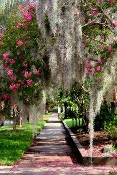 Spanish Moss Downtown Charleston
