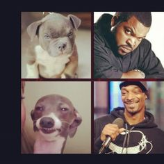Rappers in dog form! THIS MADE ME LAUGH SO HARD