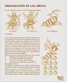 Manual Apícola Ilustrado - Beekeeping Illustrated Manual.