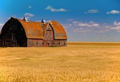 Beautiful barn and field of grains....