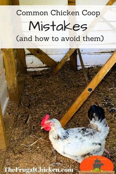 Chicken Coop - Dont make these mistakes. Heres what your chicken coop should contain (and what it shouldnt).: Building a chicken coop does not have to be tricky nor does it have to set you back a ton of scratch. Portable Chicken Coop, Backyard Chicken Coops, Chicken Coop Plans, Building A Chicken Coop, Diy Chicken Coop, Chickens Backyard, Backyard Poultry, Chicken Feeders, Chicken Tractors