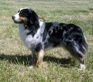Hottest No Cost farm Dog Breeds Style : Need for more information on the several puppy kinds? Now there are above 200 diverse Kennel Team accepted pet dog bree Best Farm Dogs, Australian Shepherd Dogs, Dog List, The Fox And The Hound, Airedale Terrier, Lap Dogs, Puppy Breeds, Farm Yard, Working Dogs