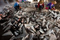 Shark Fin by Paul Hilton  World Press Photo