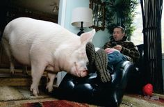 Esther the wonder pig Meet Esther, The 'Wonder Pig' Who Has Convinced Thousands To Turn Vegan