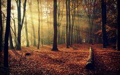 fall, Forest, Nature HD Wallpaper Desktop Background