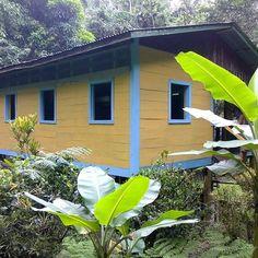 Rain Forest dream in Costa Rica