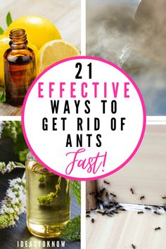 Household Cleaning Tips, Cleaning Recipes, House Cleaning Tips, Cleaning Hacks, Bug Control, Pest Control, Ant Removal, Homemade Insecticide, Ant Spray
