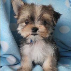 11 Best Pups n love images | Pets, Cats, Cutest animals