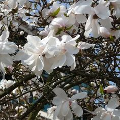Five Fab Flowering Trees