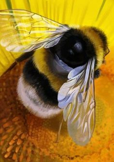 The previous little souls who pollinate our flowers & flowering trees & vegetabl. - The previous little souls who pollinate our flowers & flowering trees & vegetabl… – Tiere – # - Beautiful Creatures, Animals Beautiful, Animals And Pets, Cute Animals, Dragonfly Wings, Bird Wings, Butterfly Wings, I Love Bees, Bees And Wasps