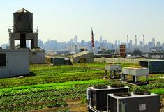 NY rooftop farming might get easier pending City decision