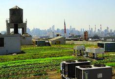 green design, eco design, sustainable design, Brooklyn Grange, rooftop farm, Department of City Planning, Urban Design Lab