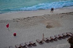 Turtle nest the morning after, Cancun * Xcaret, Xplore + 1, wild aspect; Westin looks ok for families