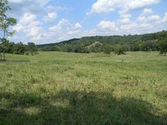 Have you been looking for a mixture of a cattle and/or recreational property. Look no farther. There is 8 paddocks with 6 automatic waters, and 1 tire water, along with 4 ponds and a spring. A excellent pipe corral sits down in the valley to catch and work your livestock. Long hill top ridges and valleys with wet weather seeps and a wet weather creek through the property. Fencing ranges from electric to 7 strand barb wire, with some pipe corners. Owner states about 35 pairs in Wasola MO