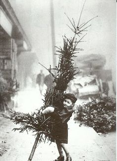 Vintage Christmas photo - child carrying a tree
