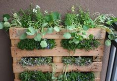 Standing garden made out of pallets. With a little paint or stain, this will be perfect for my basement window.