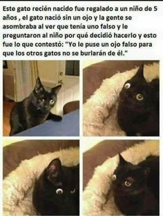 Animals And Pets, Baby Animals, Funny Animals, Cute Animals, Funny Spanish Memes, Spanish Humor, Bts Memes, Funny Memes, Wholesome Memes