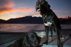 Bess (top) and Paddy ride the Cecil Peak boat to the start of the Autumn muster of the lake face at Cecil Peak Station, Queenstown, Central Otago, New Zealand. New Zealand Beach, Central Otago, Photo Report, Stunning Photography, Surfing, Creatures, Boat, Adventure, Mountains
