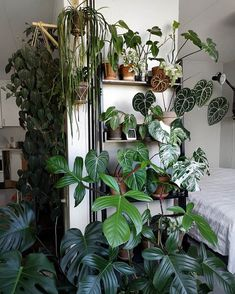 adorable indoor decor ideas that very inspire current 8 < Home Design Ideas Indoor Plant Shelves, Indoor Plants, Plants Are Friends, Room With Plants, Artificial Plants, Plant Decor, Trees To Plant, Houseplants, Garden Plants
