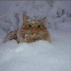⛄ #cat #katterpåinstagram #katt #catlover #catworldwide #norway #catoftheday #cats_of_instagram #catsofinstagram #catstagram #Jesperpus#thedailykitten #Mountain #adventurecat #awesomecat #agriakatt #agrianorge #bestmeow #adventurecats #redcat #mountain #petsnorge #instagramcats #instacat #petstagram #cat_features #thecataward#agriakatt