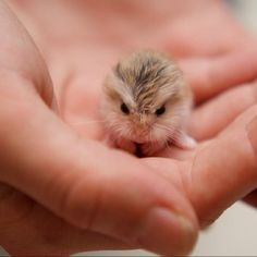 What. Is. This.... Dwarf hamster baby.
