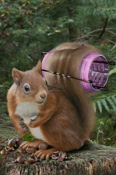 Funny Animal Photo: The things girl squirrels do for beauty