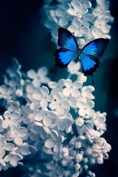 butterfly via tumblr