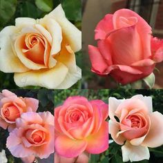 So as a thank you for 1K followers for the month of August I will be doing realistic roses for 25% OFF!!!!! - http://ift.tt/1HQJd81