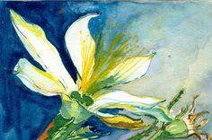 Sand Lily - Sold