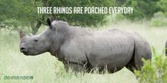 7 Animal Poaching Facts That Will Bring A Tear To Your Eye