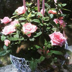 Mama wir lieben dich! #muttertag #lieblingsmensch #diefrauunseresherzens