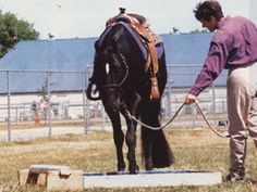 Horse Training for the Trail Class