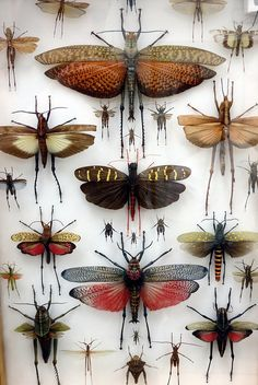 Taxidermy - Winged Bugs - creatures - insects - display - bugs - creepy - cool - new mexico - chelsea levin photgraphy