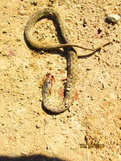 #snake #yılan