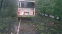 A driver in Russia was nearly killed by a falling tree in a storm. Fortunately, no one was hurt.