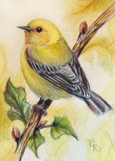 46 trendy colorful bird painting draw Best Picture For Birds Drawing with flowers Fo Bird Drawings, Animal Drawings, Drawing Animals, Drawing Birds, Bird Pictures, Pictures To Paint, Watercolor Bird, Watercolor Paintings, Watercolor Drawing