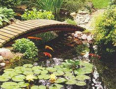 koi pond bridge to front door at DuckDuckGo Fish Ponds Backyard, Backyard Water Feature, Koi Ponds, Fish Pond Gardens, Koi Fish Pond, Garden Pond, Water Gardens, Koi Carp, Pond Bridge