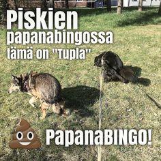 #papanaBINGO! Luonnonmukainen arpapeli ulkonaliikkujille. Saatko sinä KolmenSuoran?! #papanabingohaaste #t #pooch #mutt #poopbingo