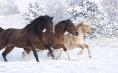 Horses running in the snow!