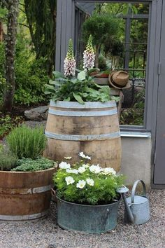 (Piazzan) Wine barrel and container gardening.' (Piazzan) Wine barrel and container gardening.'Wine barrel and container gardening.'(Piazzan) Wine barrel and container gardening.'Wine barrel and container gardening. Rustic Garden Decor, Rustic Gardens, Outdoor Gardens, Country Farmhouse Decor, Back Gardens, Small Gardens, Roof Gardens, Pot Jardin, Garden Cottage